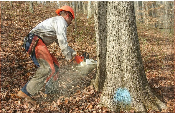 Wade Norris Logging Policies
